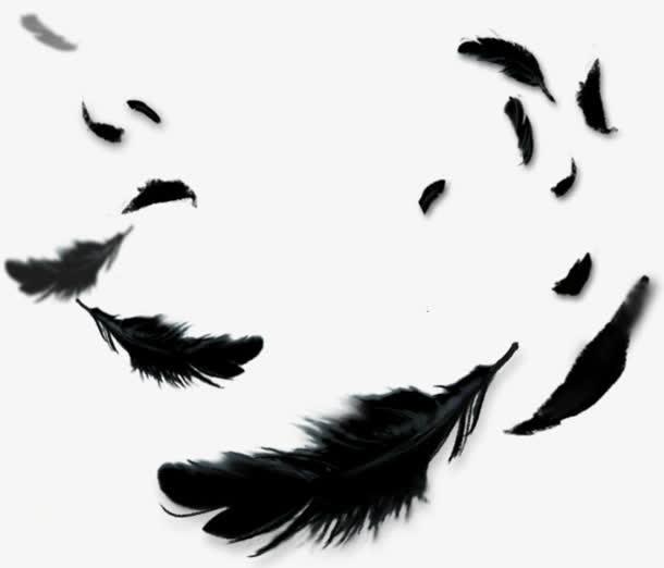 黑色羽毛飘落.jpg